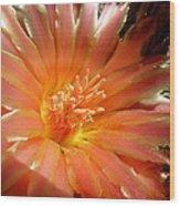 Glowing Cactus Flower Wood Print