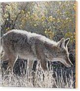 Glowing Coyote  Wood Print