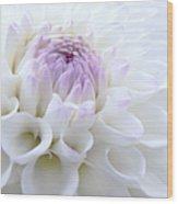 Glowing Dahlia Flower Wood Print