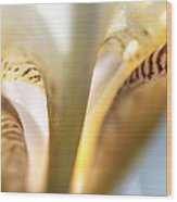 Glowing Details. Macro Iris Series Wood Print