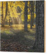 Glowing Maples Square Wood Print
