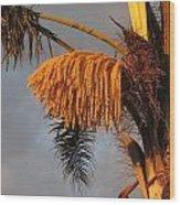 Glowing Palm Blossoms Wood Print