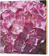 Glowing Pink Hydrangea Wood Print