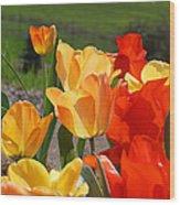 Glowing Sunlit Tulips Art Prints Red Yellow Orange Wood Print