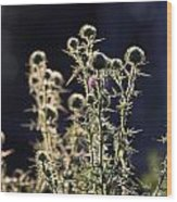 Glowing Thistle - 2 Wood Print