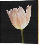 Glowing Tulip Wood Print