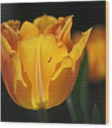 Glowing Tulips Wood Print by Rona Black