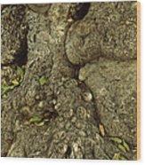 Gnarled Haitian Tree Trunk Wood Print