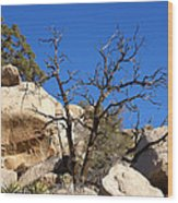 Gnarly Joshua Tree Wood Print by Barbara Snyder
