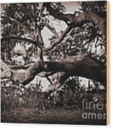 Gnarly Limbs At The Ashley River In Charleston Wood Print