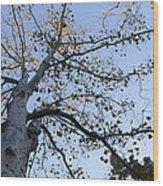 Go Climb A Tree Wood Print