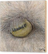 Goat Eye Farm Ranch Animal Art Cathy Peek Wood Print