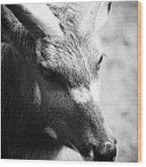 Goat Wood Print