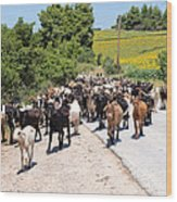 Goat Herd Wood Print