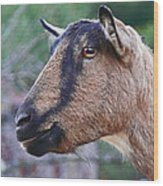 Goat In Profile Wood Print