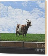 Goat On A Sod Roof In Sister Bay In Wisconsin Wood Print