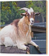 Goat On The Roof Wood Print
