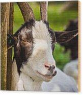 Goat Portrait Wood Print