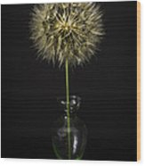 Goat's Beard In Vase Wood Print by Mitch Shindelbower