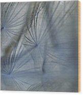 Goat's Beard Seed Macro Wood Print
