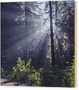 God Rays Through The Fog Wood Print