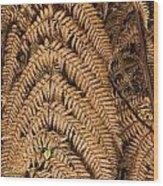 Goden Fern Branch Wood Print