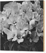 Godetia Wild Roses Wood Print
