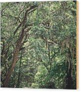 God's Canopy Wood Print
