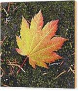 God's Perfect Leaf Wood Print