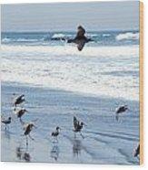 Godwits Landing On Pacific Coast Beach Wood Print