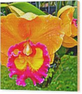 Gold And Pink Orchid At Maerim Orchid Farm In Chiang Mai-thailan Wood Print