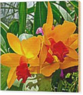 Gold And Red Orchids At Maerim Orchid Farm In Chiang Mai-thailan Wood Print