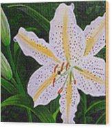 Gold Band Lily Wood Print