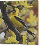 Gold Finch Gold Leaves Wood Print
