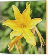 Gold Flower Wood Print