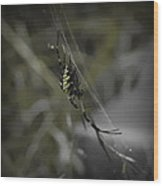 Gold Orb Weaver Wood Print
