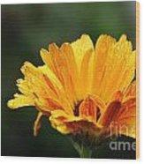 Gold Petals Wood Print