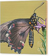 Gold Rim Swallowtail Butterfly Wood Print