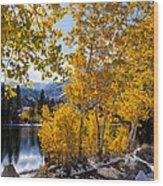 Golden Aspen On The Lake Wood Print