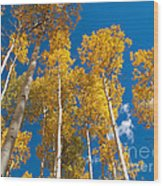 Golden Aspen Stand Wood Print