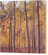 Golden Aspens Of Owl Creek Pass In Southern Colorado Wood Print