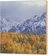 Golden Aspens With Mt. Sneffels Wood Print