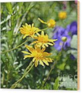 Golden Aster Wood Print