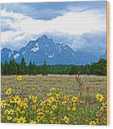 Golden Asters And Tetons From The Road In Grand Teton National Park-wyoming Wood Print