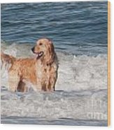 Golden At The Beach Oil Wood Print