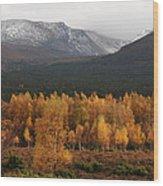 Golden Autumn - Cairngorm Mountains Wood Print