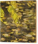Golden Autumn Colour Foliage On Rainy Pond Wood Print