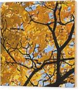 Golden Autumn - Featured 3 Wood Print