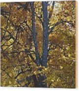 Golden Autumn Foliage At Palenville In October Wood Print