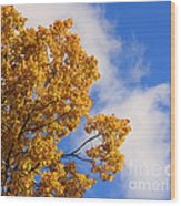 Golden Autumn Leaves And Blue Sky Wood Print